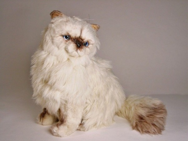 Piutre Sitzende Perser Colourpoint Katze 2431 ca.50cm Sitting Himalayan Persian cm.40