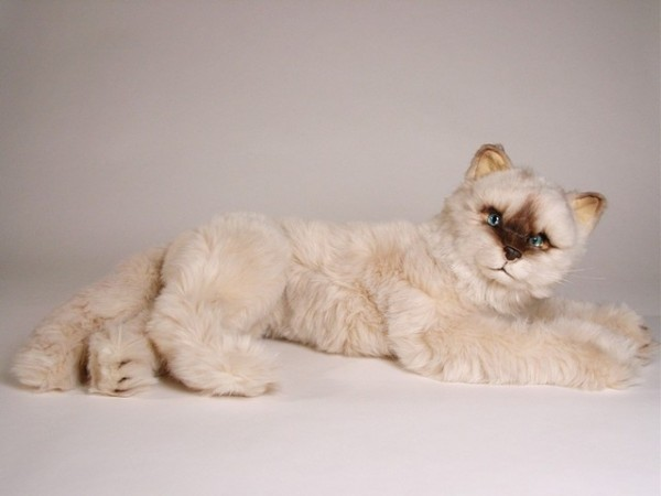 Piutre Liegende Seal Point Katze ca. 55cm Lying Seal Himalayan cat cm.55