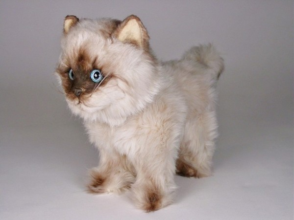 Piutre Stehende Seal Point Katze ca. 30cm Standing Seal Himalayan cat cm.30